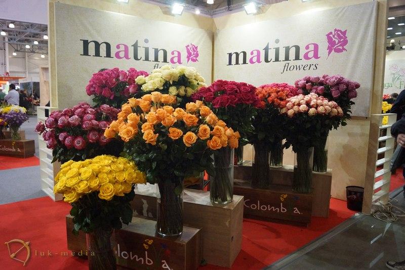 цветы экспо 2015 крокус экспо