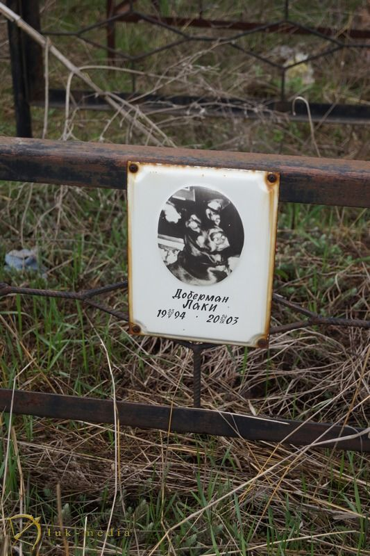 кладбище домашних животных в ростове на дону