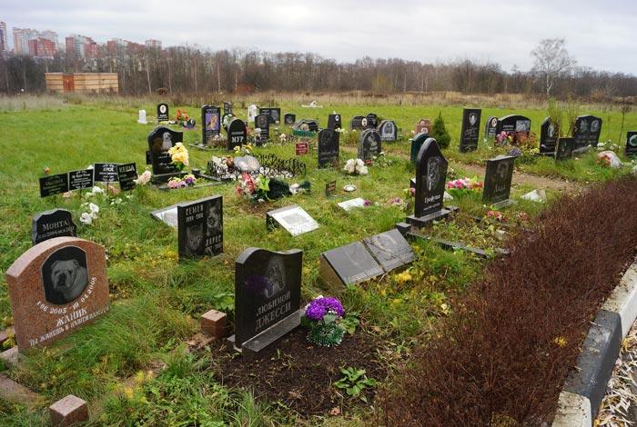 кладбище домашних животных фото