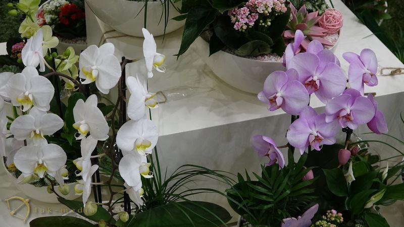 Выставка цветы экспо