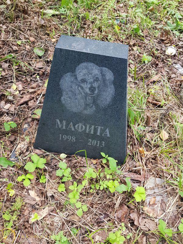 Кладбище домашних животных во Владивостоке