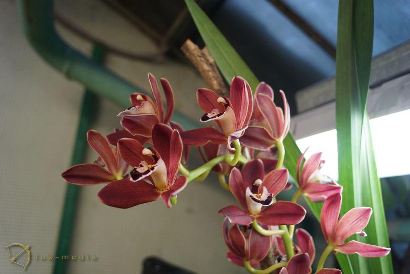 новогодняя выставка орхидей 2016