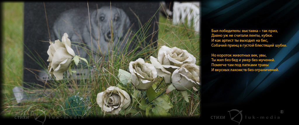 стихи на памятник собаке победителю