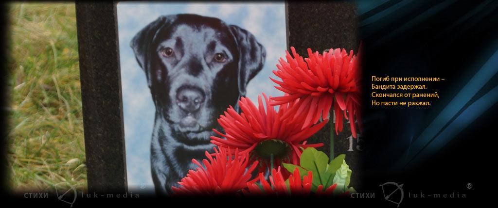 эпитафия служебной собаке