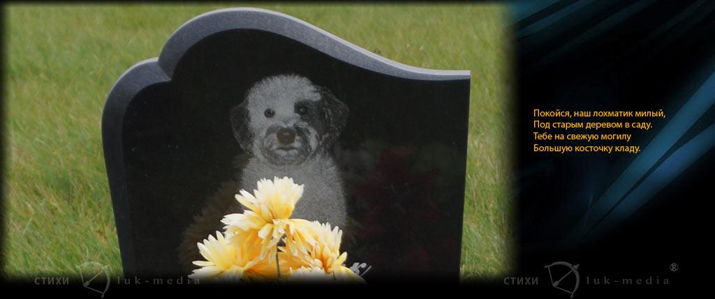 стихотворение про собаку грустное