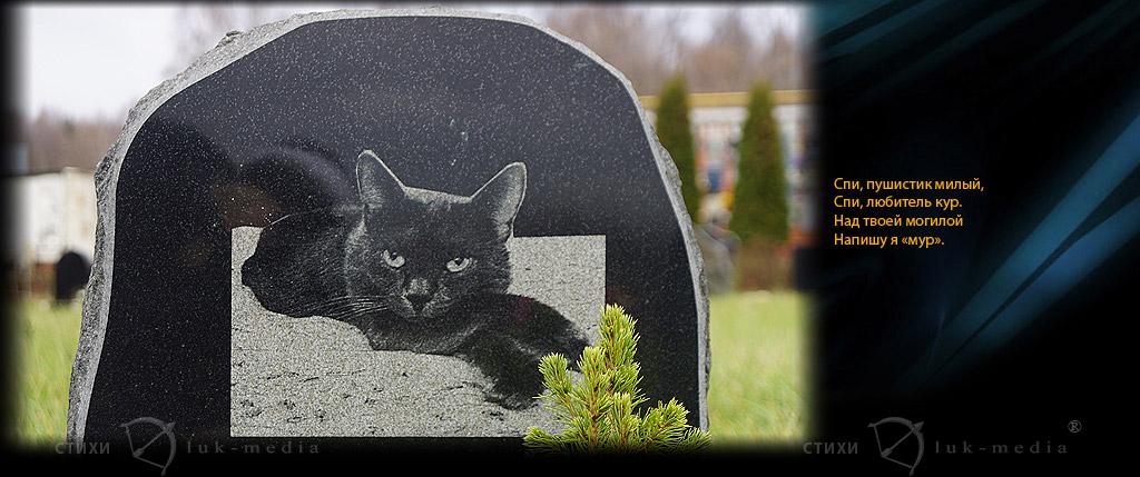 умер кот стихи