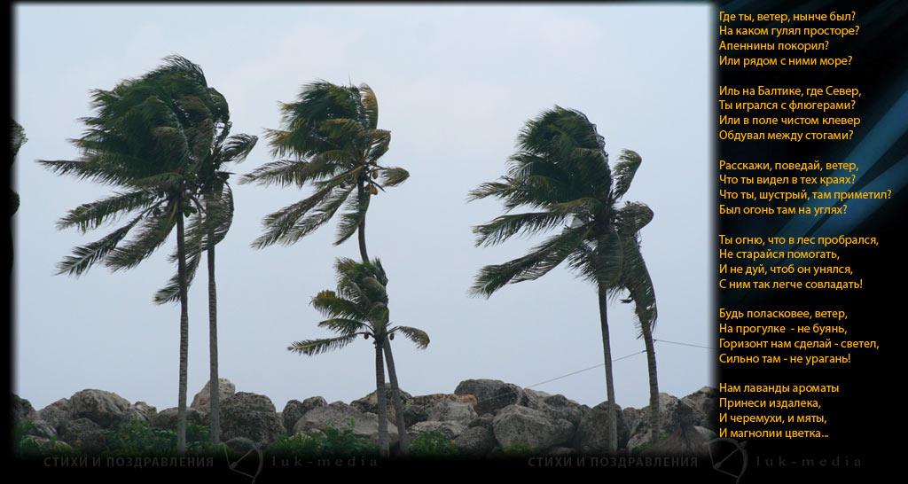 стихи про ветер