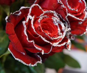 поздравления с днем валентина