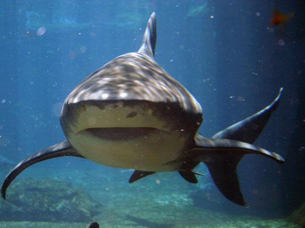 пазлы онлайн без регистрации акула