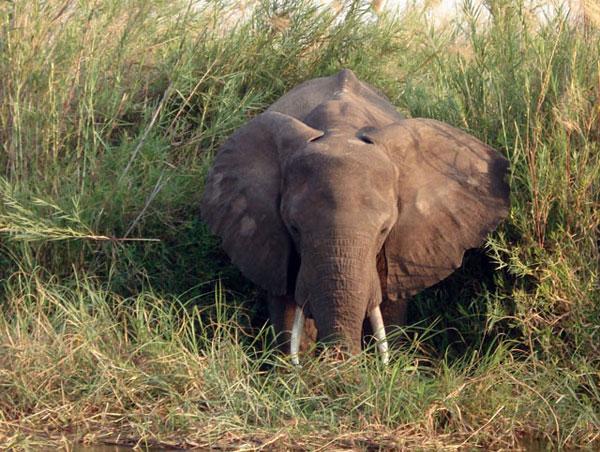 пазлы онлайн без регистрации слон