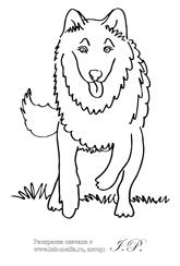 раскраска волк, волк картинка раскраска, серый волк ...