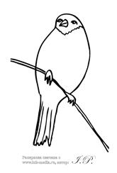 Раскраски птицы снегирь