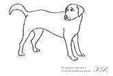 раскраска собака и щенок, печатать раскраски про собак ...