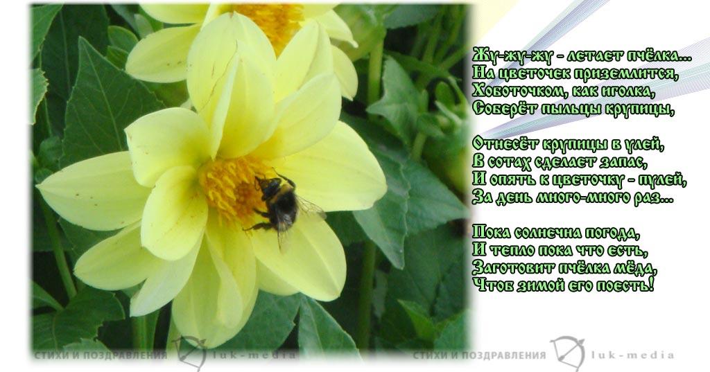стихи о пчелке
