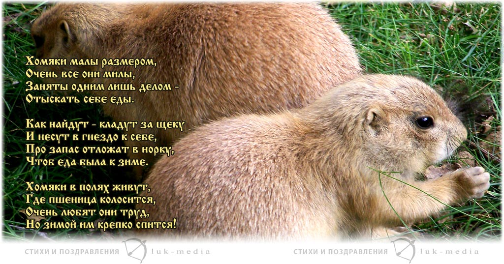 стихи про хомяков