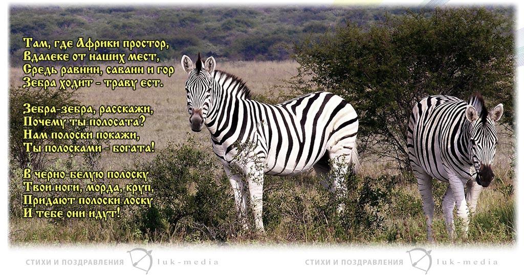 стихи про зебру