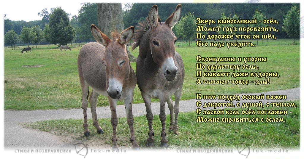 стихи про осла