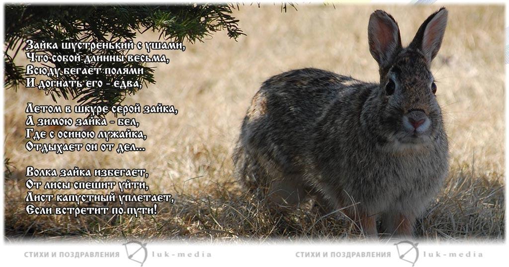 стихи про зайку