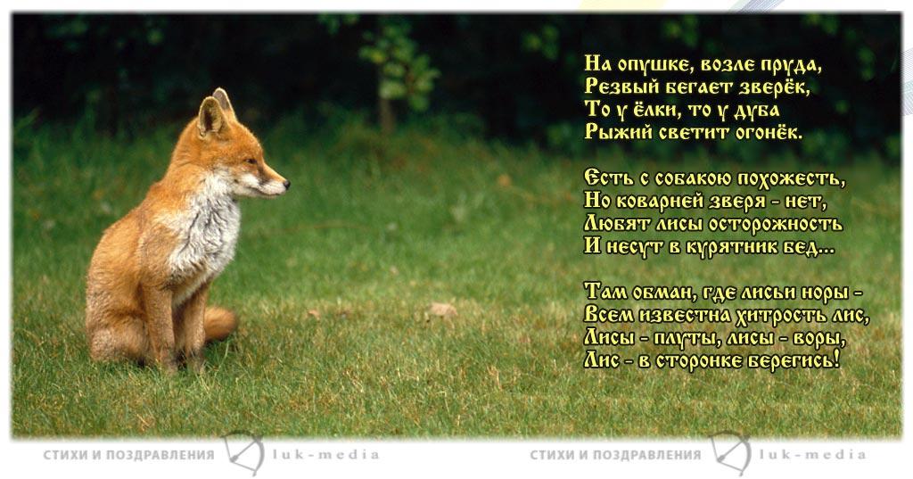 стихи про лису