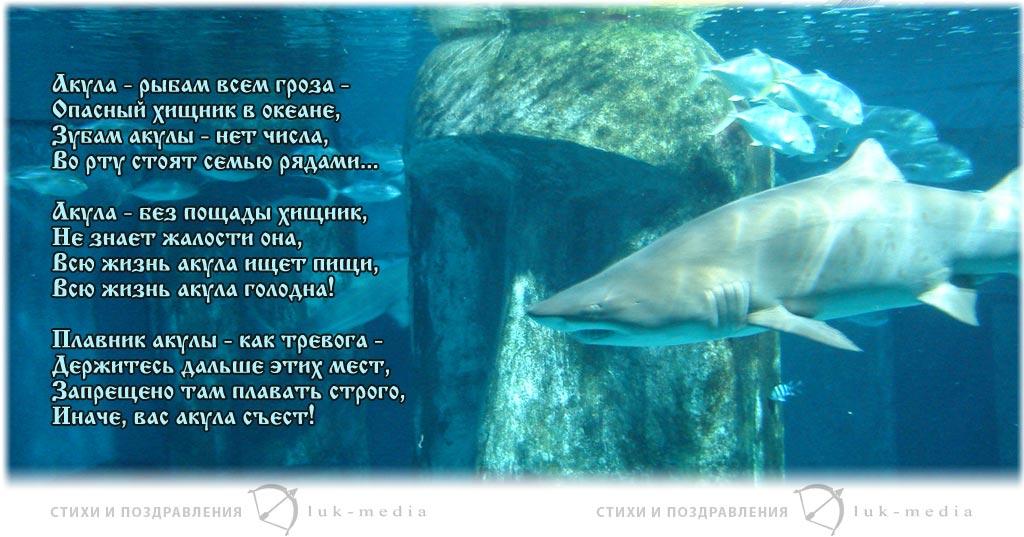 стихи про акулу