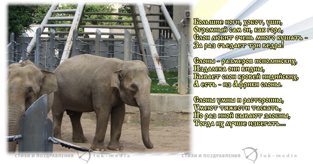 стихи про слона