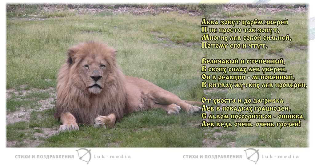 стихи про льва