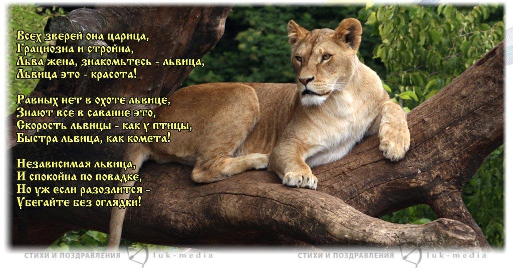 стихи про львицу