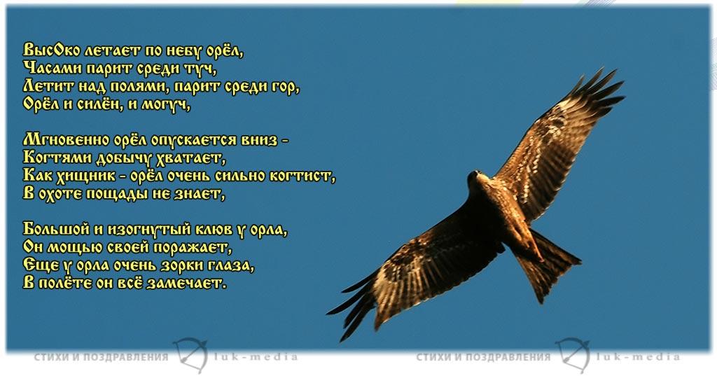 стихи про орла