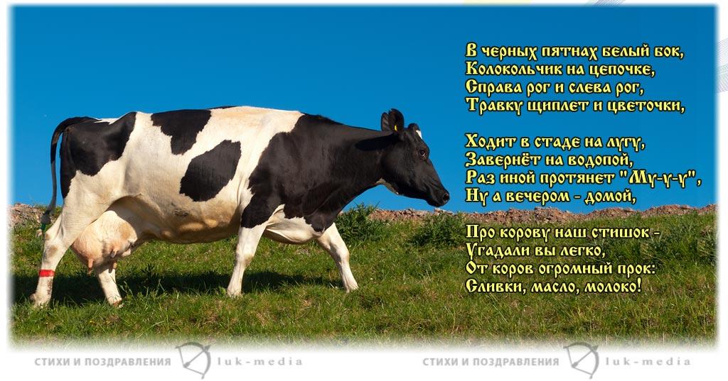 стихи про корову