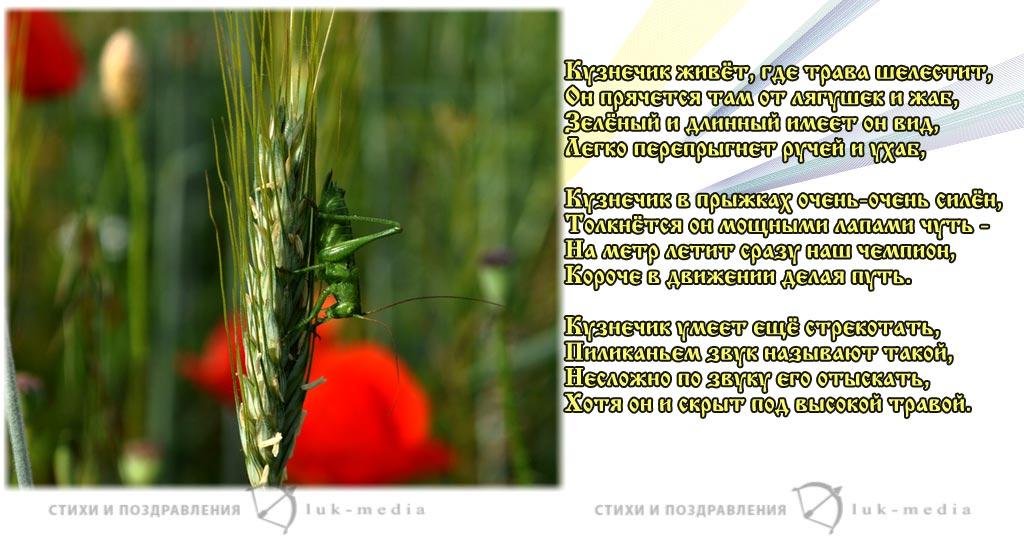 стихи про кузнечика
