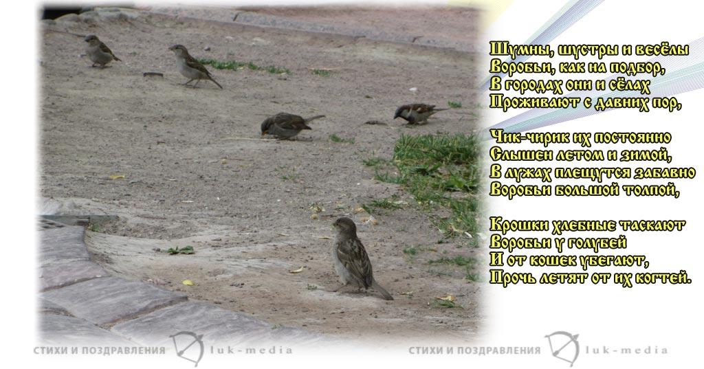 стихотворение дружининой травку клюет воробьишка