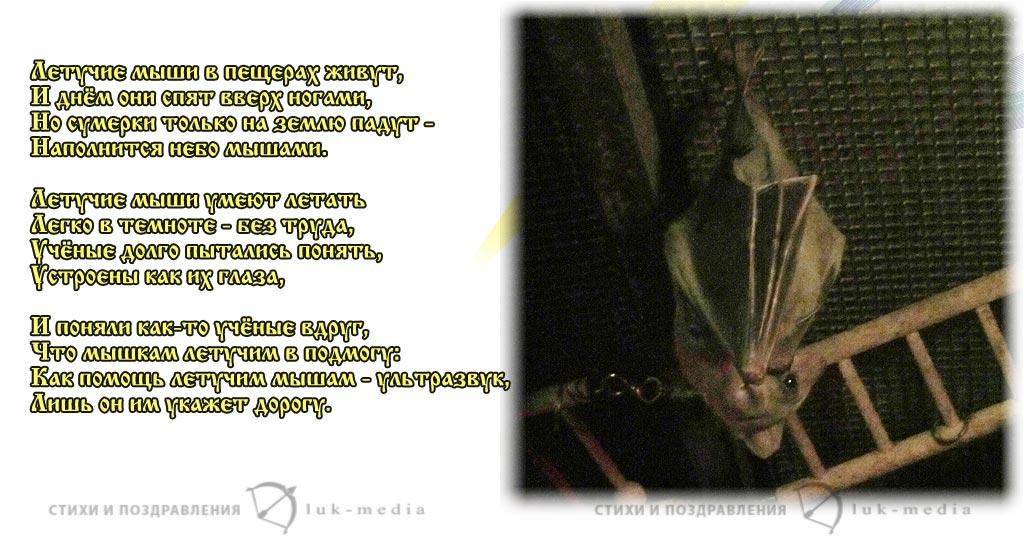 стихи про летучую мышь