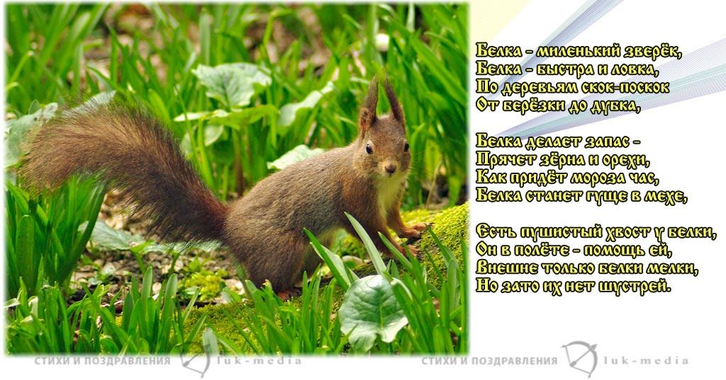 стихи про белку