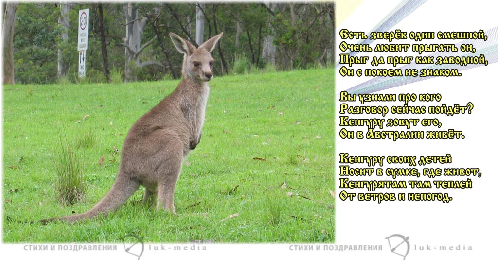 стихи про кенгуру