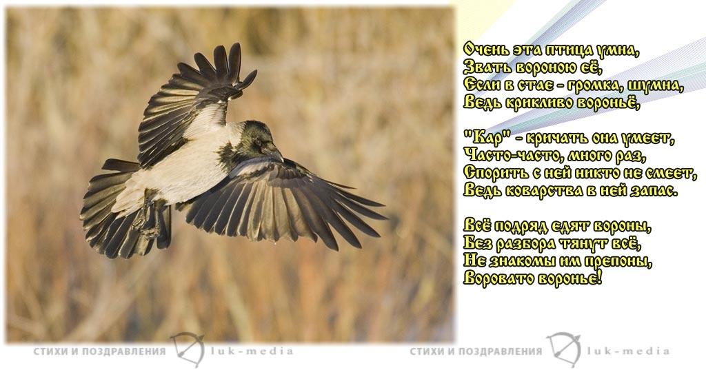 стихи о вороне