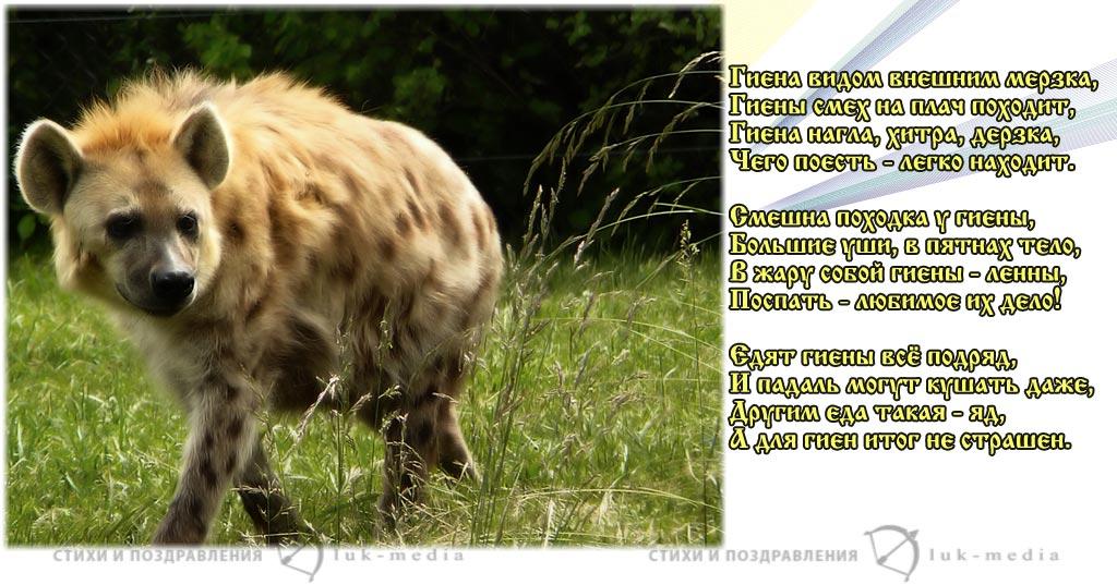 стихи про гиену