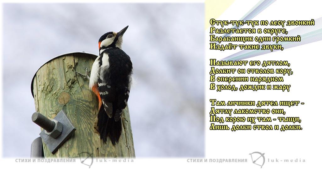 стихи про дятла