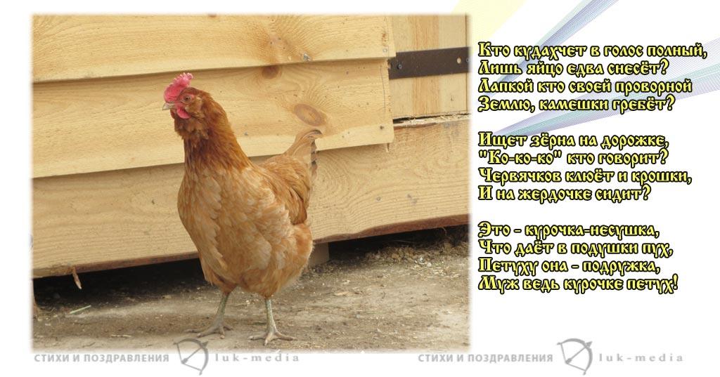 стихи про курочку