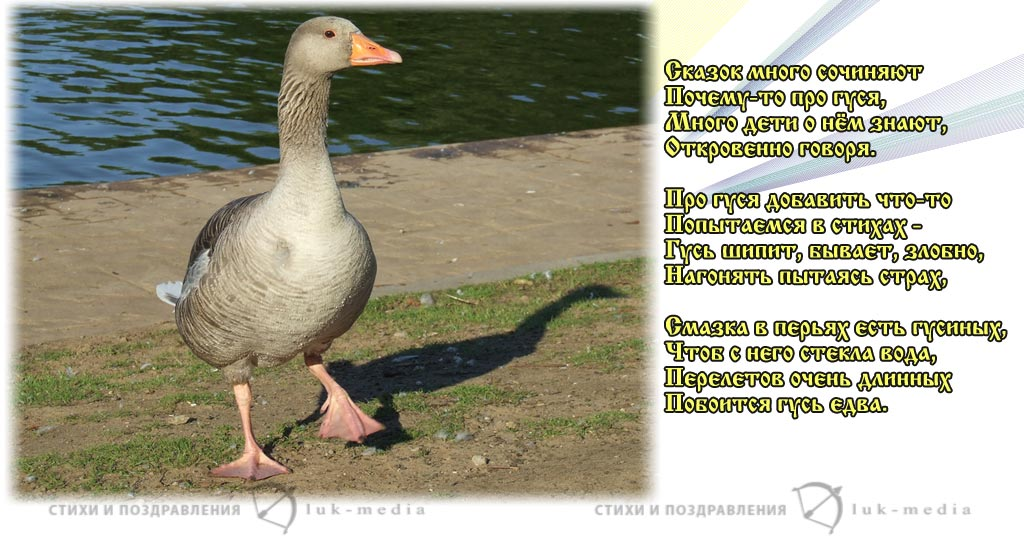 стихи про гуся