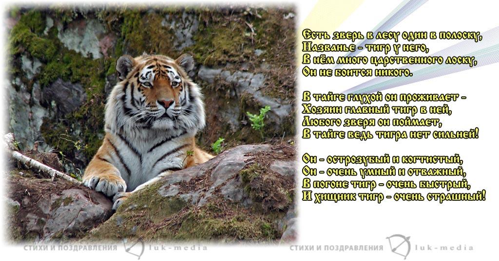 стихи про тигра