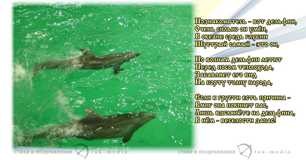 стихи про дельфинов