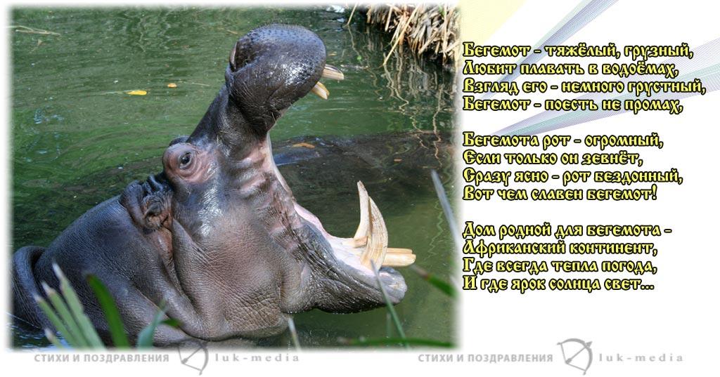 стихи про бегемота