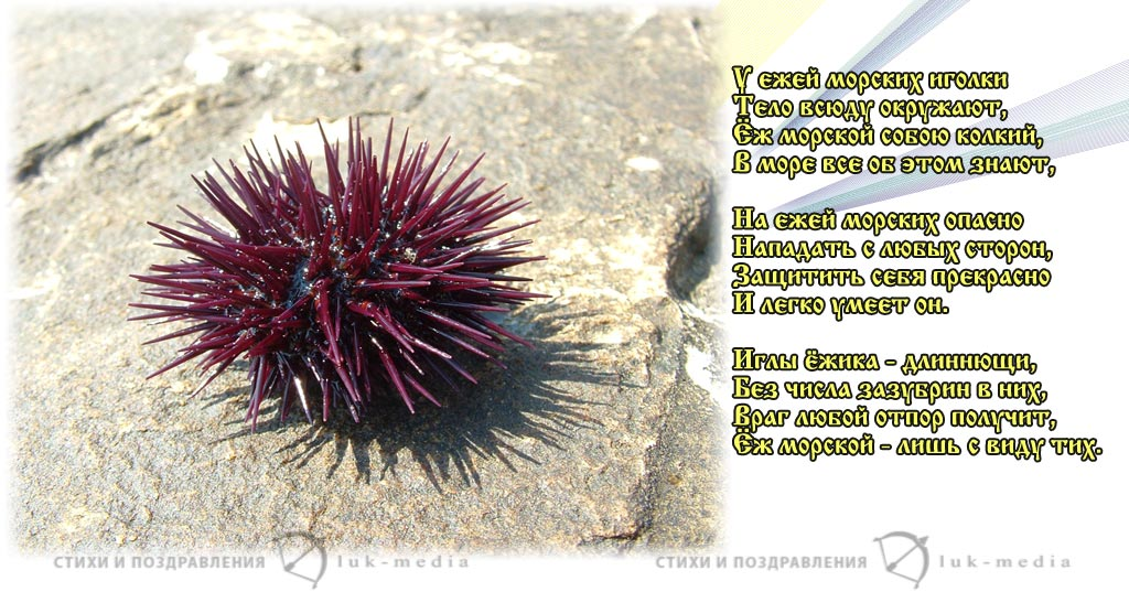 стихи про морского ежа