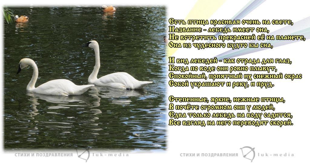 стихи о лебедях