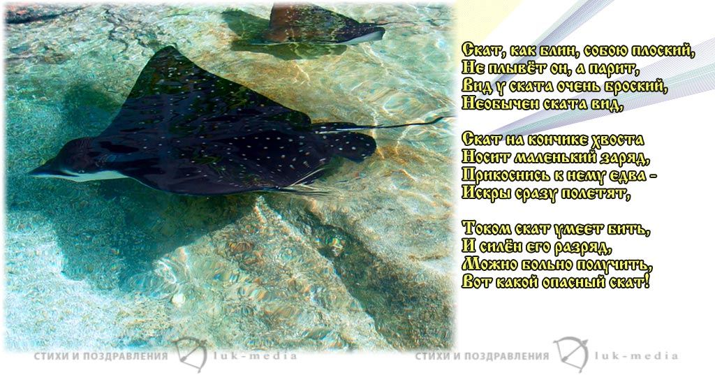 стихи про ската