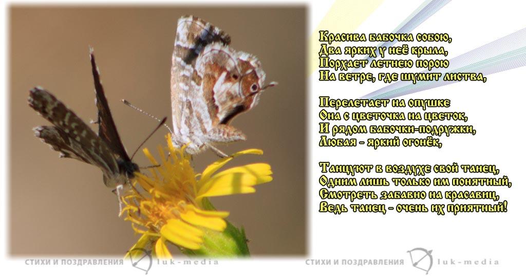 стихи о бабочках