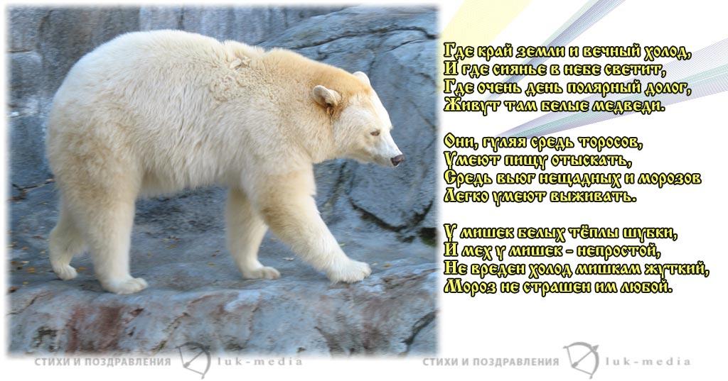 стихи о белом медведе