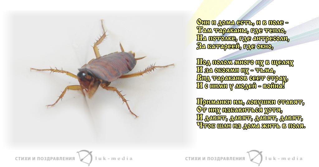 стихи про тараканов