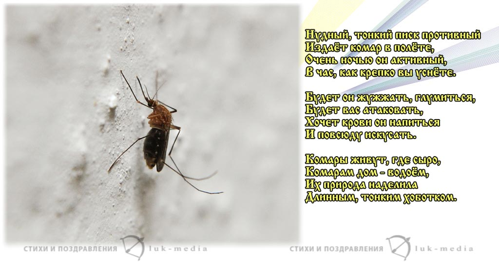 стихи про комара