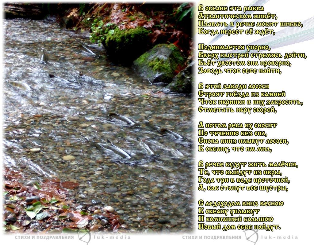стихи про лосось